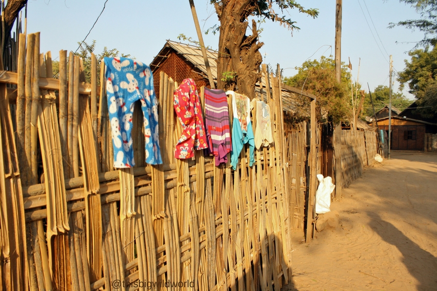 Image of laundry drying on a bamboo fence in a village near Bagan in Myanmar.