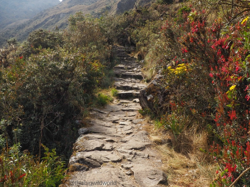 Image of the Inca Trail on Day 3 of the hike in Peru with flowers along the trail.