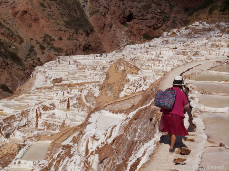 Image of a brightly dressed Peruvian woman walking through the white salt plots of Salineras de Maras in the Sacred Valley near Cusco Peru.