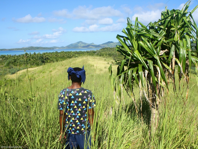 Image of my hiking guide as we walk through the tall grass and volcanic rock near the top of Nacula Island in the Yasawa Islands in Fiji.