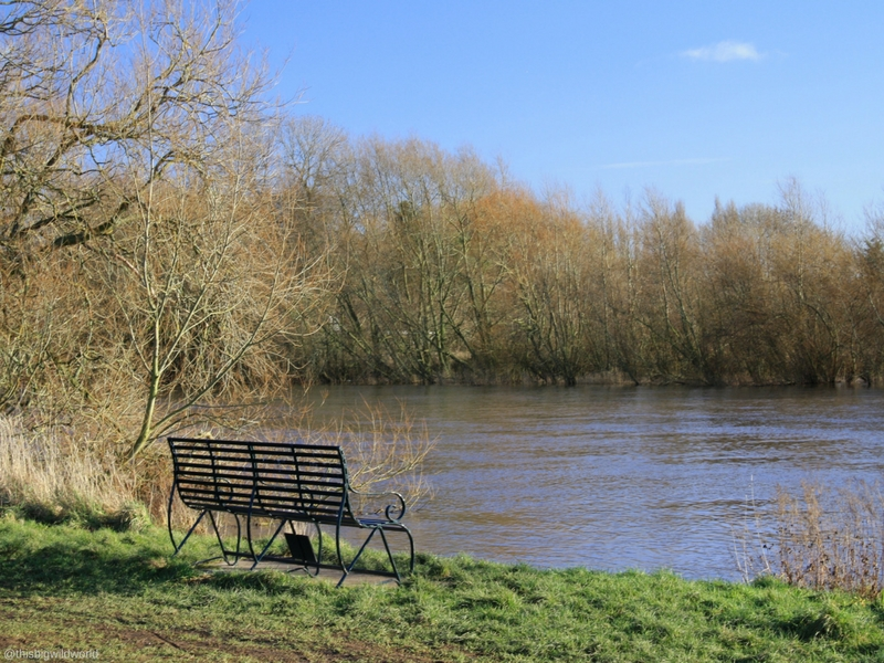 Image of a park bench along the River Dee in Chester England.