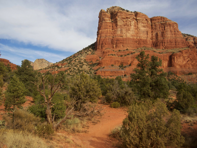 Image of Courthouse Butte red rock formation along the Bell Rock Trail in Sedona Arizona.
