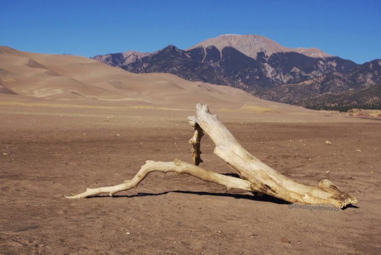 Image of dead tree limb with shadow lying on sand in front of sand dunes with mountains behind them at Great Sand Dunes National Park in Colorado.