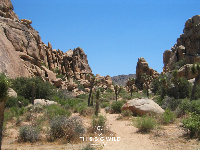 Image of large rock formations and joshua trees near the North Entrance to Joshua Tree National Park in California.