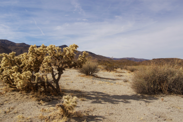 Image of landscape from South Entrance of Joshua Tree National Park including mountains in the background and cloudy blue sky.