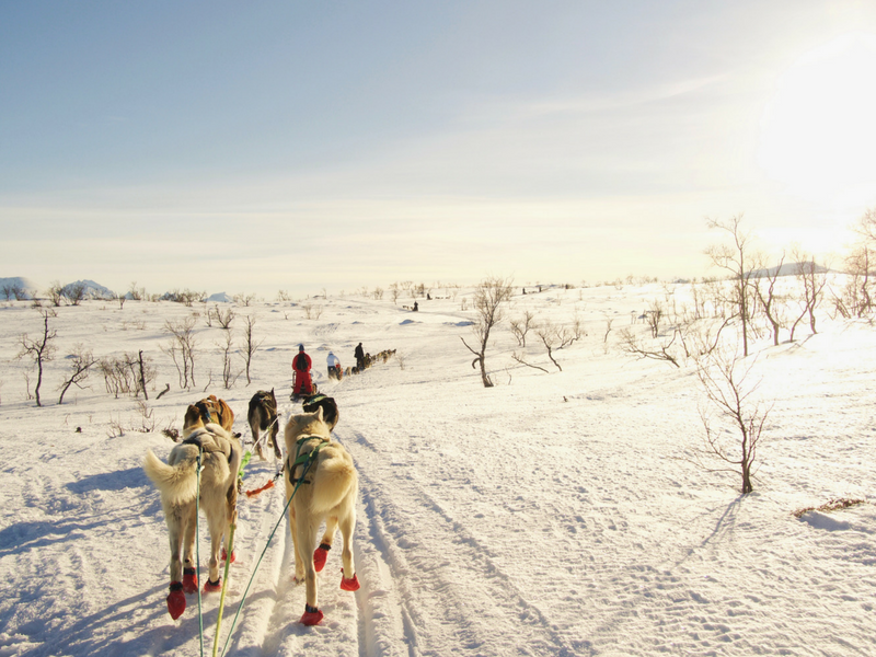 Dog sledding with Tromso Villmarkssenter is one of the things to do in Tromso Norway.