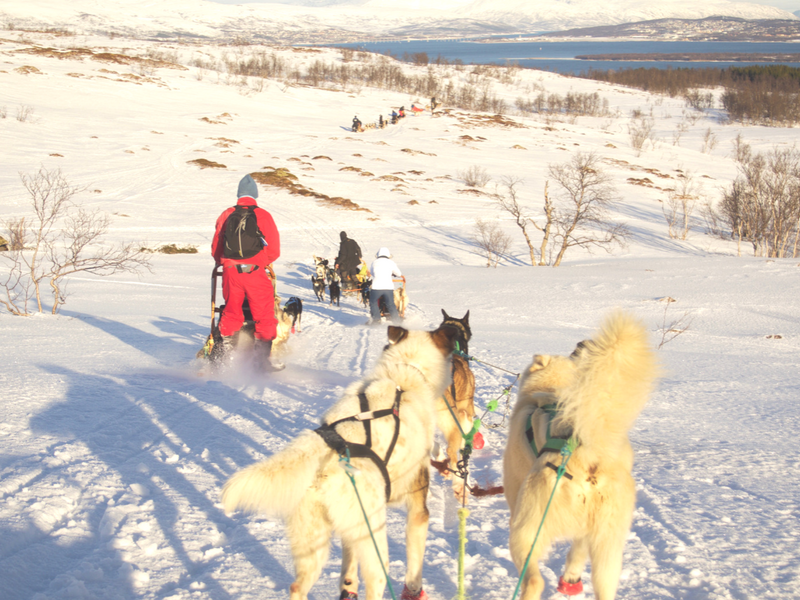 Dog sledding downhill through the Arctic countryside is one of the things to do in Tromso.