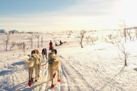 Epic adventures in Tromso in winter include dogsledding, chasing the northern lights, winter hiking and more!