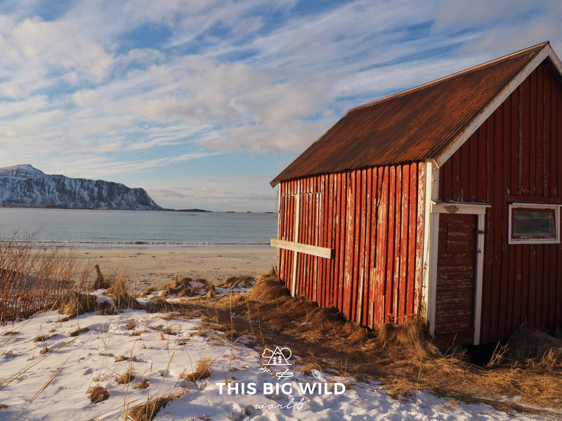 The iconic red cabin on the snow-covered Rambergstranda Beach in the Lofoten Islands Norway.