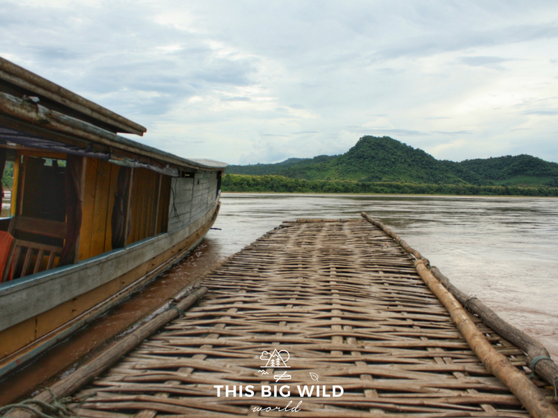 The woven floating boat dock at Pak Ou caves on the Mekong River near Luang Prabang in Laos.