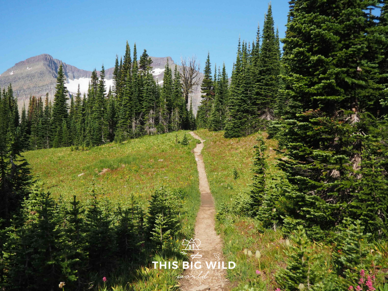 There are more than 700 miles of hiking trails at Glacier National Park.