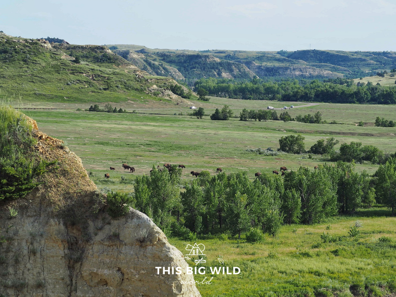 See bison grazing from above at Theodore Roosevelt National Park.