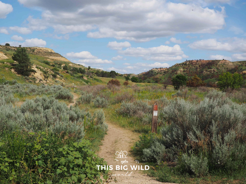 The Jones Creek Trail in Theodore Roosevelt National Park is an easy 3 mile trail lined with wildflowers and grassy plains.