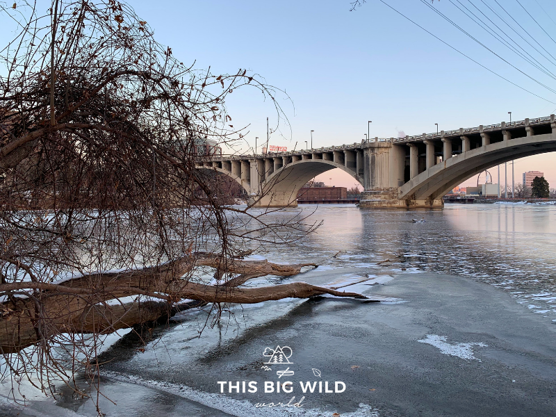 Image of the Mississippi River in Minneapolis taken with an iphone XS (no Bomgogo smartphone camera lens).