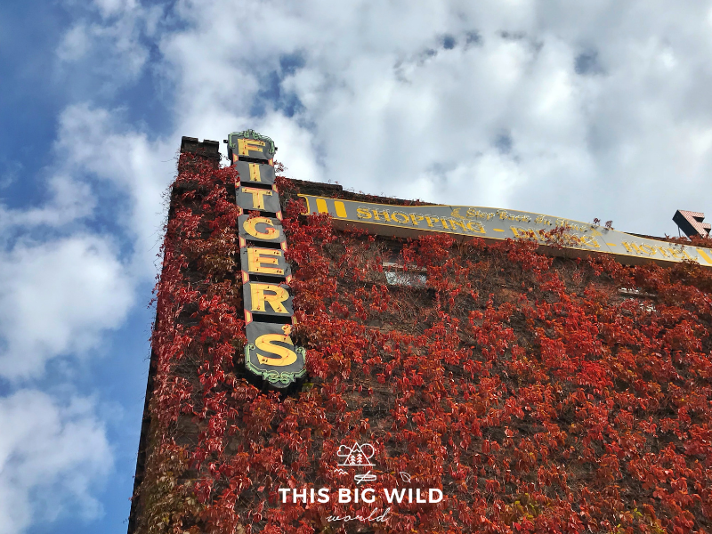 Looking up from the parking lot, the corner of Fitger's Brewery towers overhead with a vertical sign with yellow letters. The building is covered in bright red flowers and vines, with fluffy white clouds and blue sky overhead.