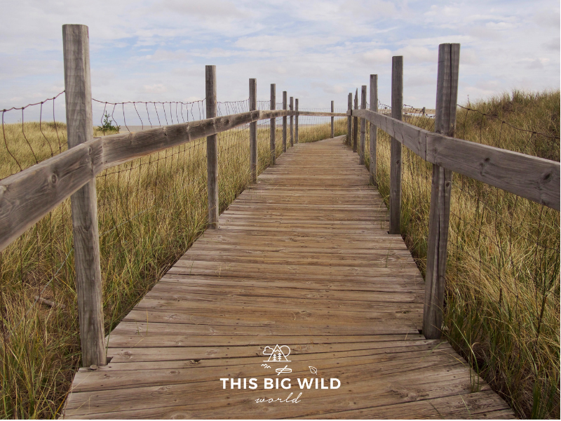 A wooden boardwalk runs from the foreground center to just right of center, with tall yellow green grass on either side. Overhead are cloudy white skies at Park Point near Duluth in Minnesota.