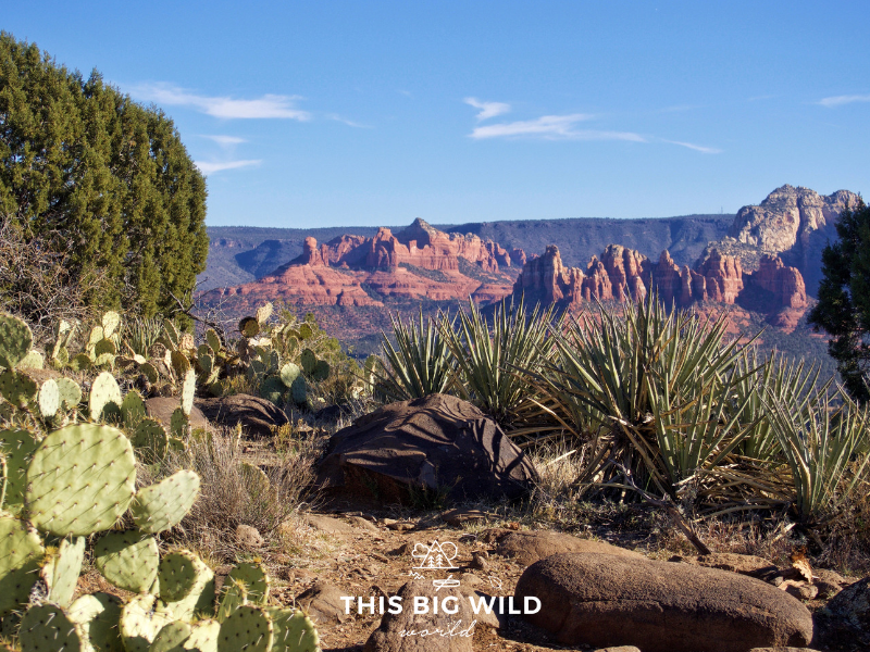 Any Arizona road trip should include hiking in Sedona. The Airport Loop Trail offers 360 degree views of the surrounding red rocks!