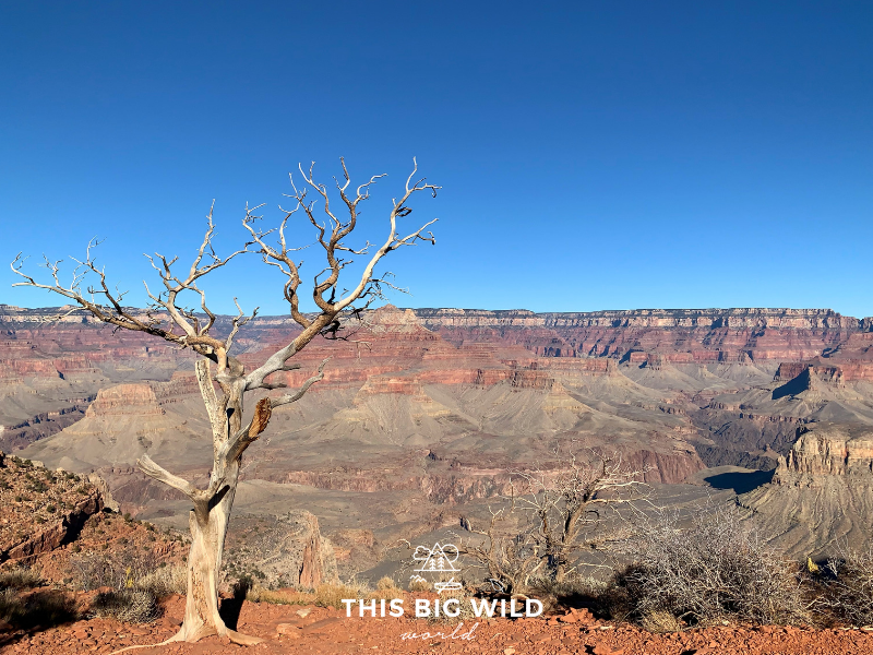 The South Kaibab Trail at the Grand Canyon South Rim allows you to hike down into the canyon.
