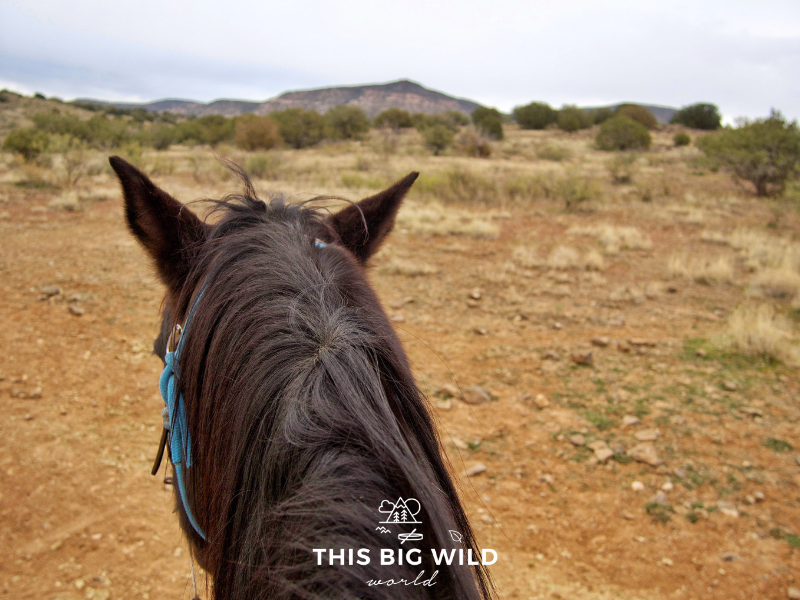 Horseback riding through the Verde Valley with M Diamond Ranch is just one of the adventures to enjoy on your Arizona road trip!