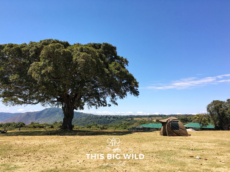 A budget camping safari includes basic tent camping. This campsite was right along the rim of the Ngorogoro Crater in Tanzania.