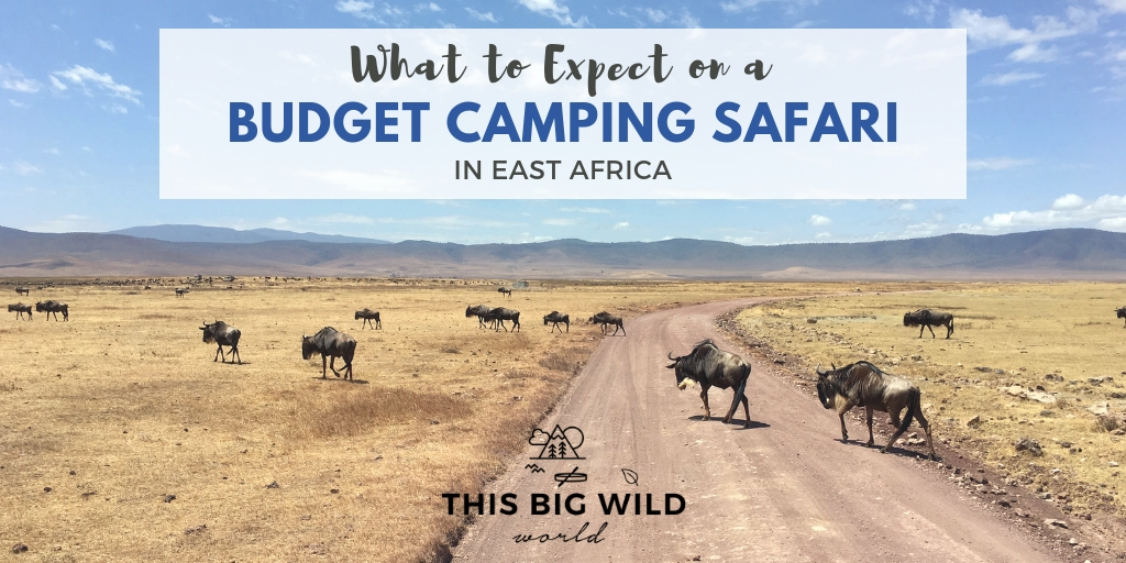 What to Expect on a Budget Camping Safari – This Big Wild World