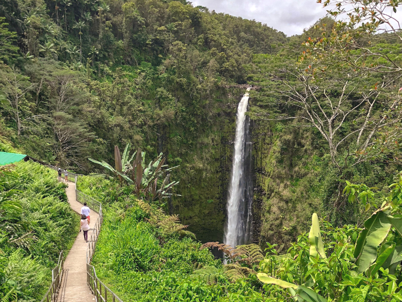 Akaka Falls State Park on the Big Island in Hawaii features a 442 foot tall waterfall surrounded by orchids and lush ferns. Photo by Sarah from ComopoliClan.