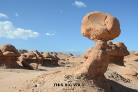 Goblin Valley State Park in Utah is just one of the most scenic state parks in the US. Here's the best in each state!