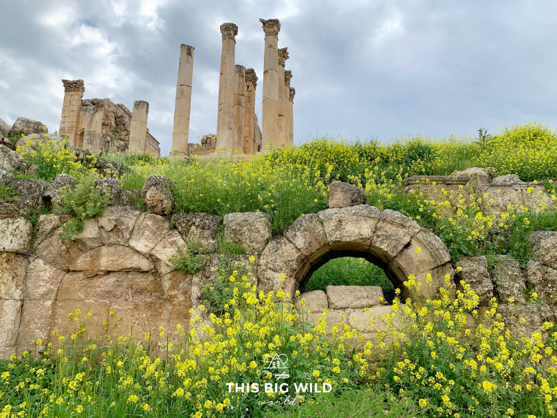 In late March and early April, see wildflowers blooming through the ancient city of Jerash near Amman.