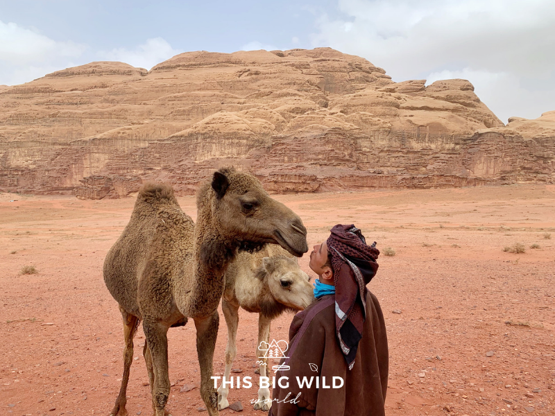 Our Wadi Rum Jeep tour guide getting a kiss from a wild camel.