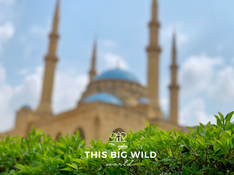 The blue domes of Mohammed Al Amin mosque blurred in the background of the bright green leaves of a bush in downtown Beirut.