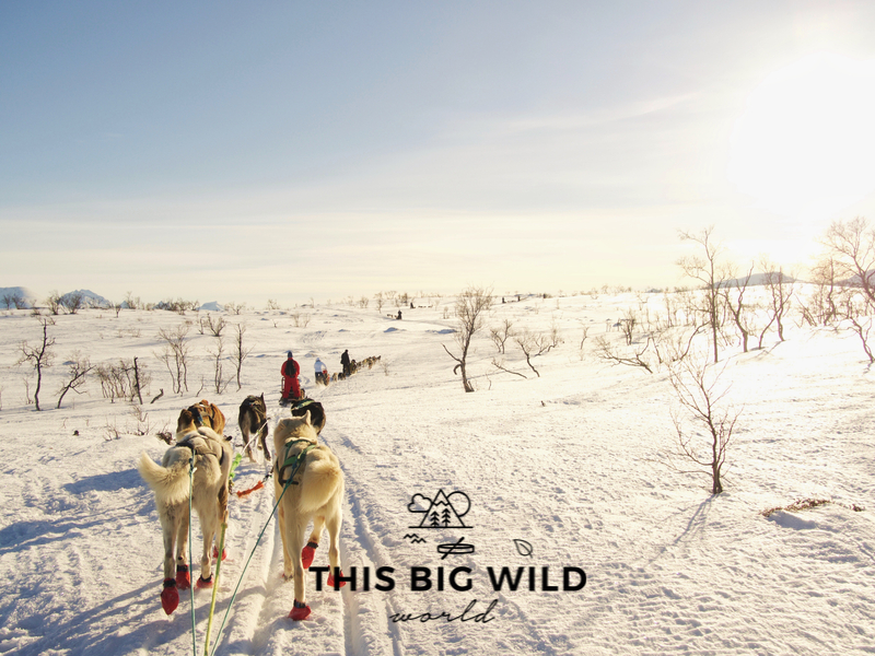 Dogsledding is one of the top things to do in Tromso in winter!