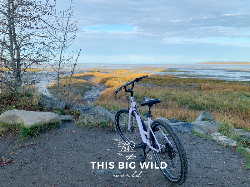 The early morning sun hits the bright yellow grass and dark gray mud flats during low tide along the Tony Knowles Coastal Trail, the perfect place to bike Anchorage Alaska.