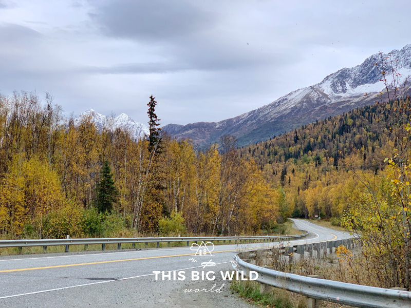 A windy road lined with bright yellow trees and snow capped mountains on the road to Palmer from Anchorage Alaska.