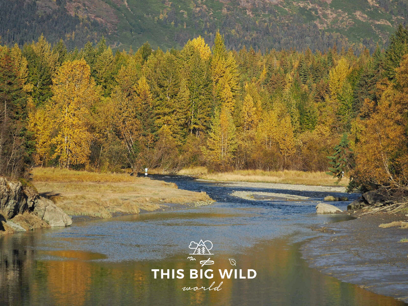 Stop along the Old Seward Highway at Bird Creek to enjoy the fall colors and maybe even some fly fishing!