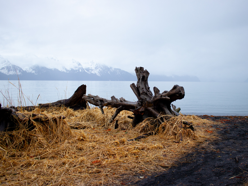 Driftwood rests on the beach near Lowell Point with snowcapped mountains in the distance.