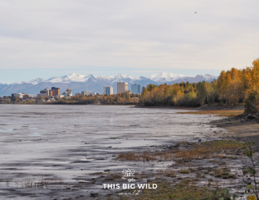 View of Anchorage skyline from the Tony Knowles Coastal Trail in Fall