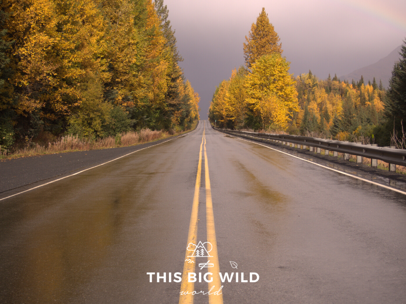 Driving from Anchorage to Seward is an incredible way to explore this 125 mile stretch of road.