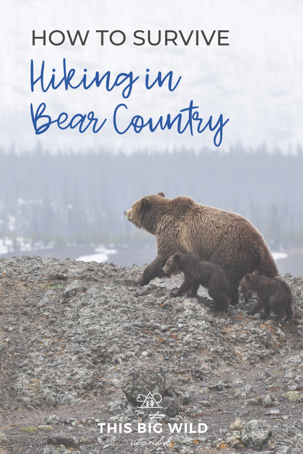 Headed hiking in bear country? Not to worry. These bear safety tips will have you trail ready in no time. Find out how to identify types of bears, how to avoid a bear encounter, what to do if a bear attacks you and more! bear aware | bear spray | grizzly bear | black bear | brown bear | hiking safety | hiking tips