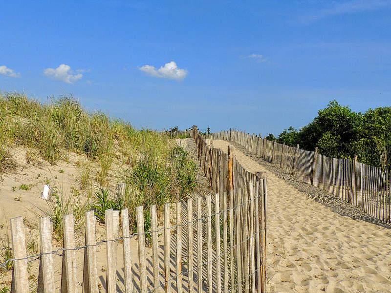 A walking path makes its way across a sand dune from the bottom right corner to the center. On either side of the path is a wooden slatted fence. Behind the fences is green grass growing on the sand dunes under a bright blue sky with a few fluffy white clouds at Cape Henlopen State Park in Delaware.