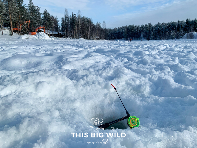 An ice fishing pole rests over a hole drilled through the ice on top of Immeljarvi lake in Levi Finland. In the distance is a line of pine trees on the shore of the lake and a wood cabin with construction equipment next to it.