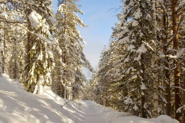 Unforgettable Things to Do in Levi Finland in Winter (for non-skiers!)