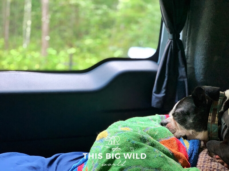 A boston terrier dog is sleeping on its dog bed inside of a campervan during a light rainstorm. Natural light from outside is coming in through the windows and the van is surrounded by a green forest.