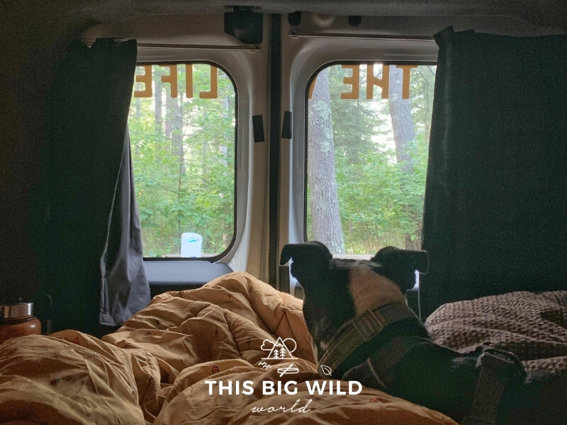 The view from laying in bed in the campervan. The curtains are pulled to the side of the two rear windows of the van. A boston terrier dog is looking out the window at the forest.
