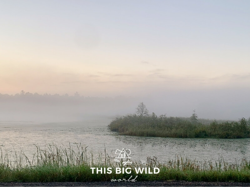 A pinkish blue sky behind a low fog that settled over one of the lakes in the Chippewa National Forest. Tall green grass is stretching eerily up from the water through the fog.