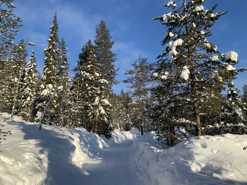 Snow packed on a trail lined with snow covered pine trees in Levi Finland, which is above the Arctic Circle.