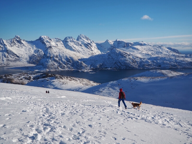 A person with a leashed dog is walking away from the camera on a trail down a mountain covered in snow overlooking snow-covered fjords in Norway.