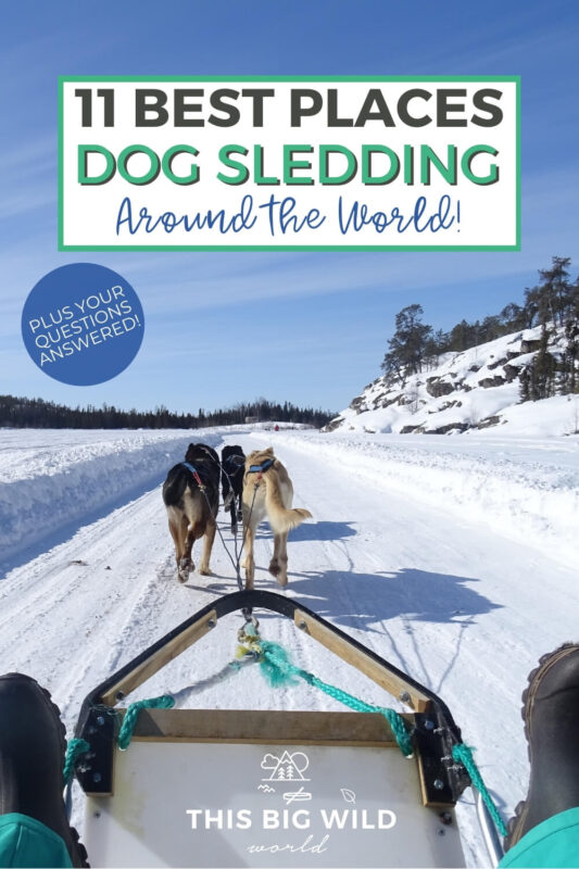 Text: 11 Best Places Dog Sledding Around the world! Image: A team of huskies pull a sled through over a foot of snow with with forest to the right and far off in the distance. View shown from inside the dog sled.