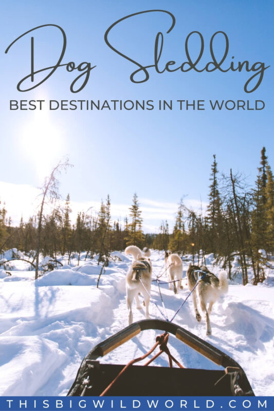 Text: Dog Sledding - Best Destinations in the World Image: Team of huskies pulling a sled through a snow covered forest with blue skies and sun overhead.