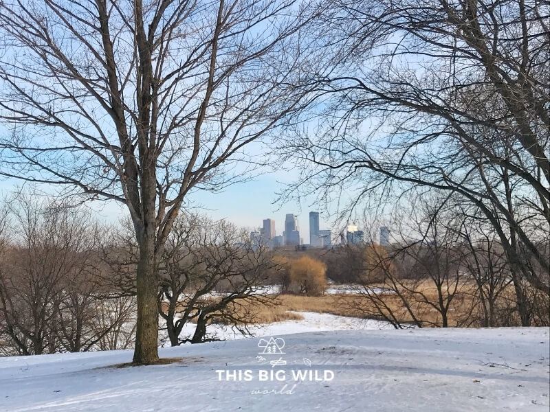 The Minneapolis skyline is visible through a break in the trees on a cross country skiing trail in Theodore Wirth Park.