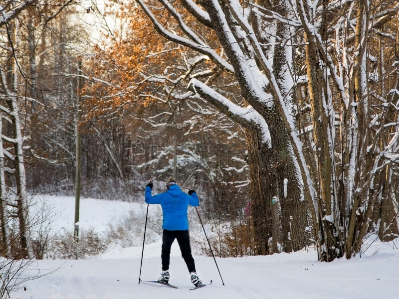 A cross country skier heads into a snow covered forest for skate style skiing.